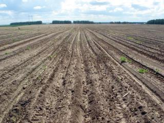 Продажа земельного участка Пензенская область, Наровчатский р-н, д. Подлесная, фото 1